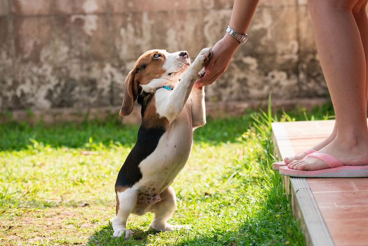 Body Part Canine Day Dog Domestic Domestic Animals Grass Hand Human Body Part Human Hand Human Leg Human Limb Mammal One Animal One Person Outdoors Pet Owner Pets Real People Vertebrate