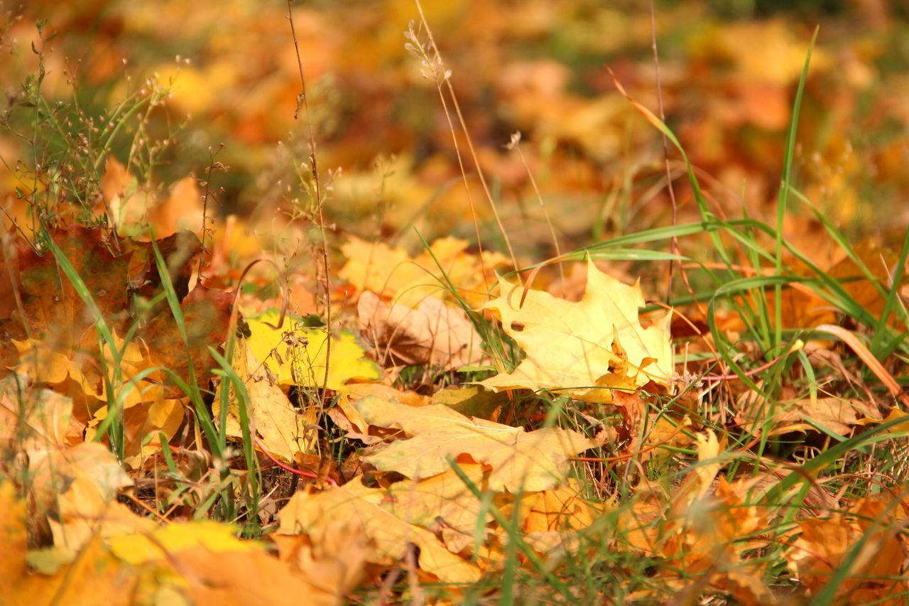 nature, autumn, field, no people, grass, beauty in nature, growth, leaf, fragility, outdoors, day, toadstool, close-up