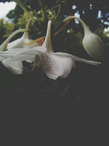 Flowerporn Flower Collection Pale Flwoer 1st