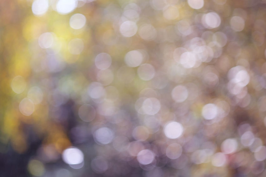 Abstract Backgrounds Brightly Lit Close-up Day Defocused Freshness Fujixe2s Full Frame Illuminated Lens Flare Light Effect Nature No People Tenebrio.photos Zeiss60mm Bokeh