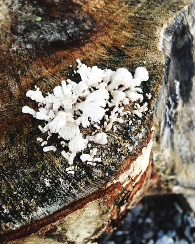Tree Trunk White Color Close-up High Angle View Wood - Material Log Growth Wood Nature Fragility Fungus Freshness Beauty In Nature