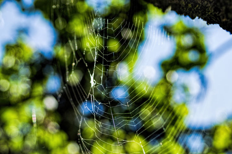 Web Detail Geometry In Nature High Contrast Nature Photography Spider Web Trap Tree And Web