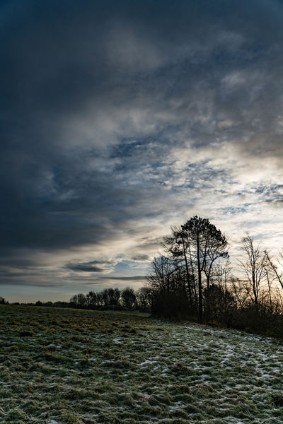 A little winter Winter Clouds And Sky Cloud - Sky Tree No People Sky Outdoors Day Nature Beauty In Nature