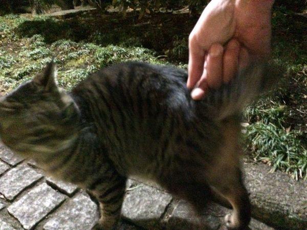 Stray Cat 野良猫 夜ねこ 走り猫 😾何触っとるんじゃっ って、感じ??ww