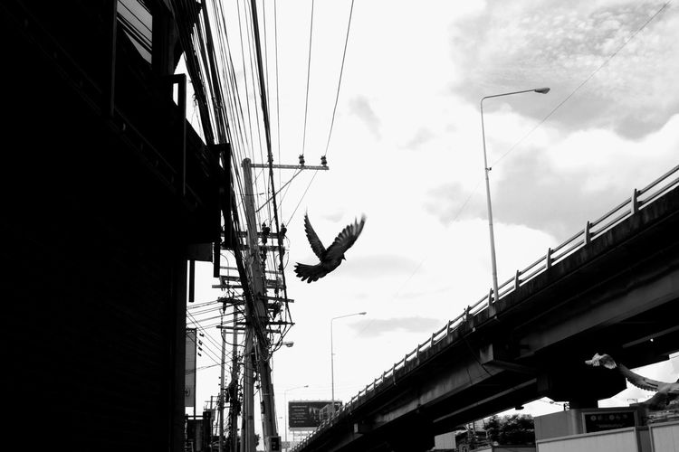 V Flying Sky Mid-air Street Streetphotography Street Photography Street Photo Streetphoto_bw Street Foto