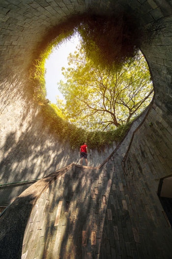 A Man looking at Fort Canning Park, tourist attraction. Nature Tunnel with trees in Singapore City. Downtown Financial District  Singapore Adult Architecture Building Built Structure Casual Clothing Day Full Length Leisure Activity Lifestyles Men Nature One Person Outdoors Plant Real People Shadow Sunlight Tree Unrecognizable Person Wall - Building Feature