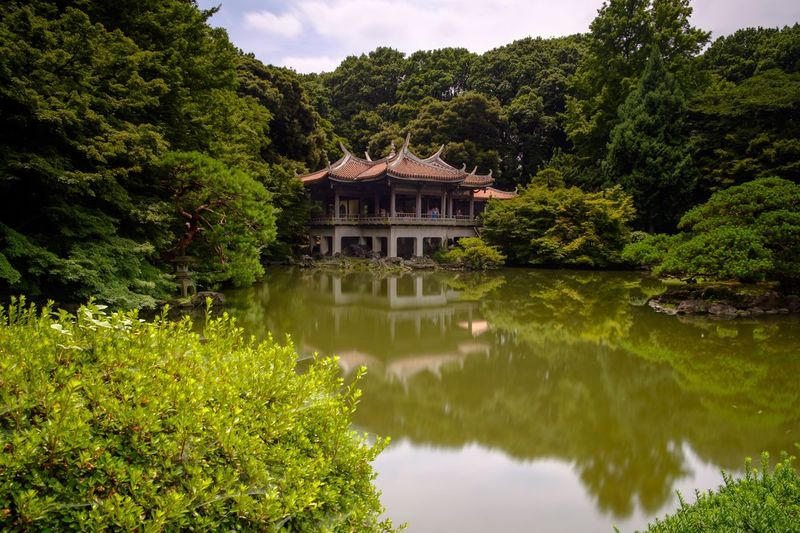 Traditional Tea House By Sakura Pond At Shinjuku Gyoen National Garden