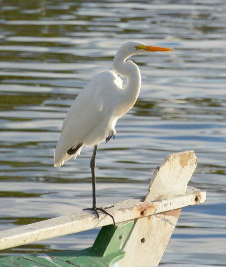 Crane perching on boat at lake