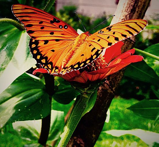 Check This Out Taking Photos Hello World Beauty In Nature Relaxing Butterfly ❤ Delight  Antenna Wings Flutterby Iphone6plus Focus On Foreground Mississippi Summer Beauty Of Nature
