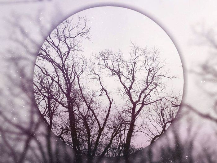 Trees Forest Autumn Winter Coming Shape Circle Outdoors Art Edited