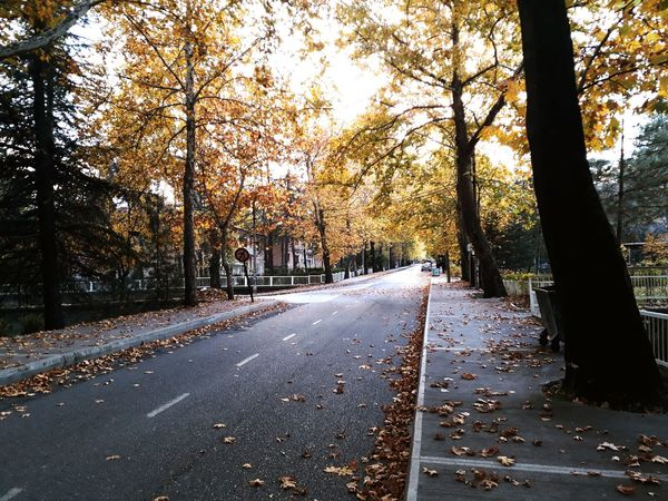 Yine bize yenişehir yolları Tree The Way Forward Road Autumn Outdoors Street Nature Day Transportation No People Leaf Beauty In Nature Scenics Sky KarabukTurkey Yenisehir Karabukphoto