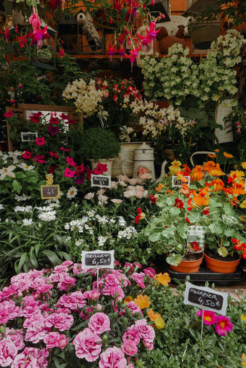 Flowers at market stall