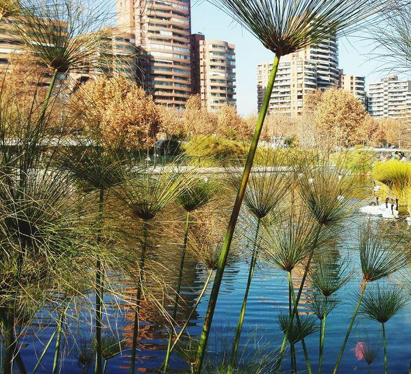 Parque Bicentenario Parque Bicentenario Vitacura Vitacura Santiago De Chile Chile Colour Of Life Calm