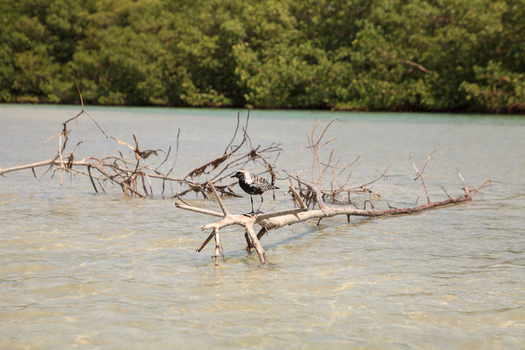 Driftwood in a lake