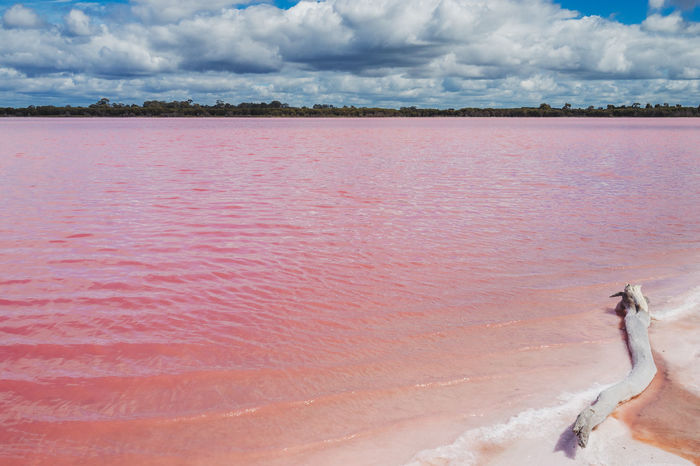 Pink Salt Lake, Victoria, Australia Australia Australian Landscape Dimboola Victoria Victorian Australian Pink Lake Pink Salt Lake Salt Lake Pink Lakes Outdoors Day Pink Color Red Water Summer Nature No People Sky Beauty In Nature