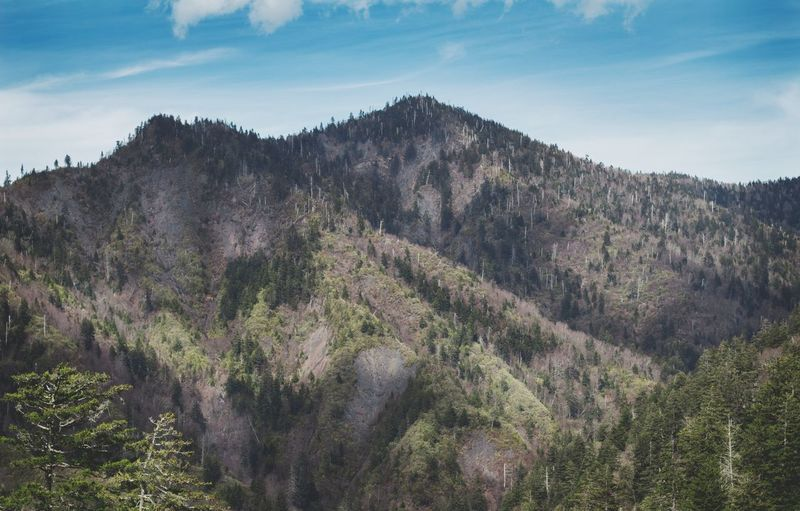 Panoramic shot of trees and mountains against sky