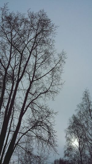 Sun Sky Sky And Clouds Tree Nature