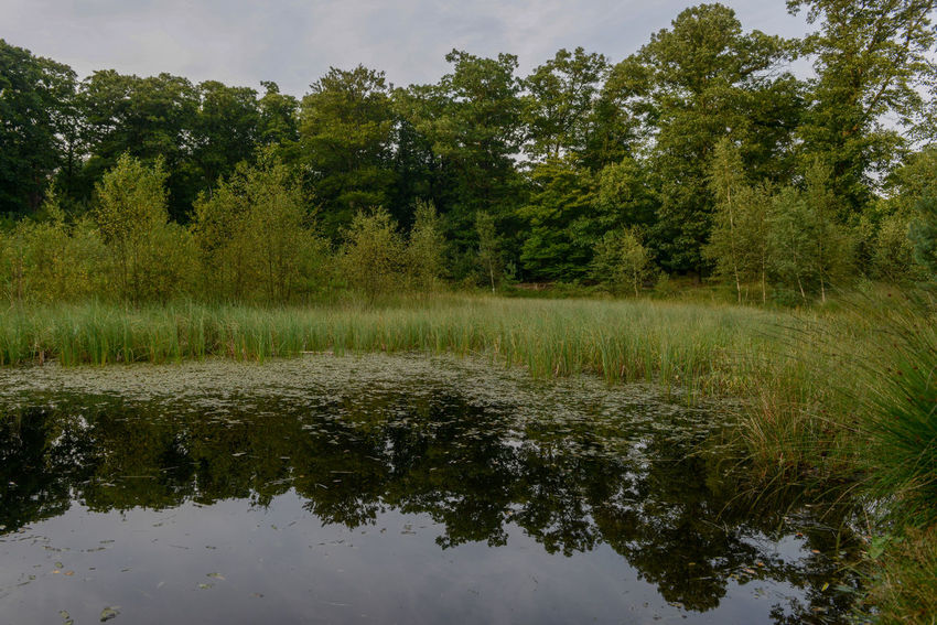 Het Zandenbos is a forest area in Nunspeet The Netherlands Netherlands Nunspeet Pond The Netherlands Tree Trees Beauty In Nature Day Dutch Dutch Landscape Forest Forest Photography Grass Growth Holland Nature No People Outdoors Reflection Rondehuis Tranquility Tree Water Zandenbos