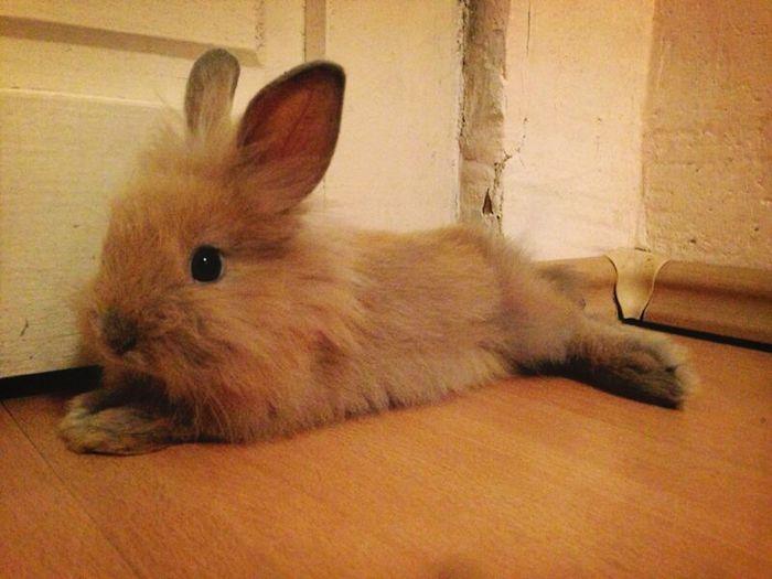 Bunny  Rabbit Iepurini