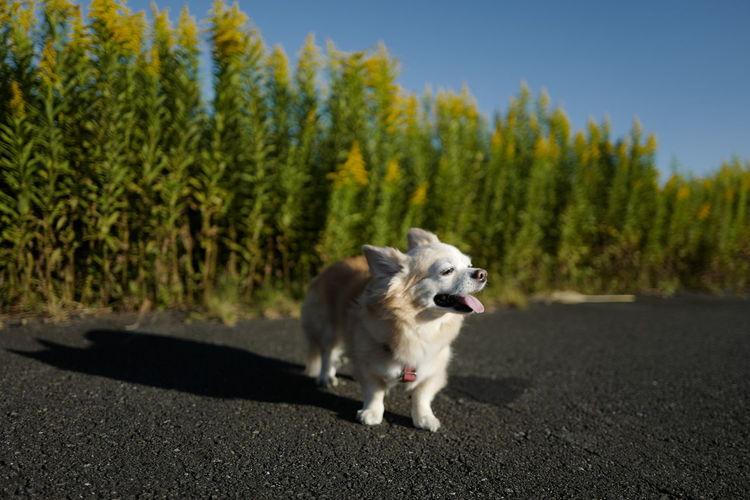 LEICA Q Leica Leicaq LEICA Q Typ116 Dog Chihuahua Bausch チワワ