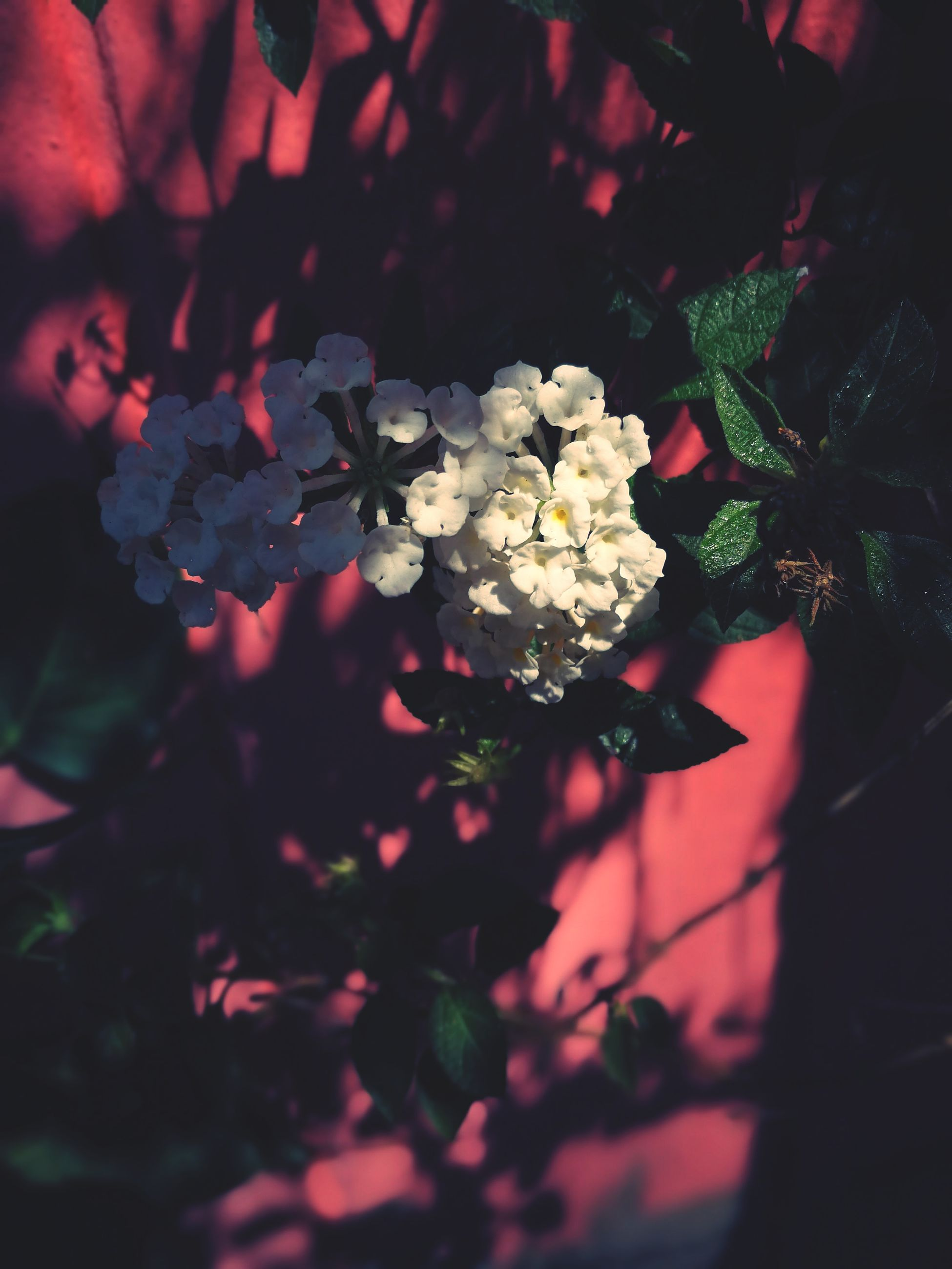 red, plant, darkness, nature, petal, flower, flowering plant, beauty in nature, close-up, leaf, no people, light, tree, growth, plant part, macro photography, branch, freshness, focus on foreground, outdoors, selective focus, black, sunlight, fragility