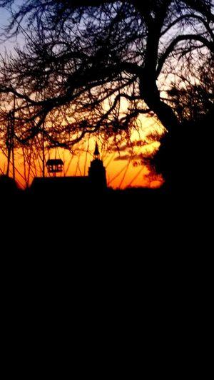 Sonnenuntergang, Lüneburg Lüneburg Lüneburg-Bilder St. Michaelis Kirche Sonnenuntergang Vogelkasten Tree Sunset Silhouette Sky