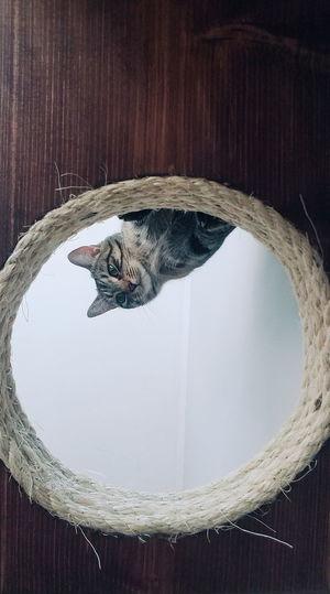 Poppy Cat Wood - Material