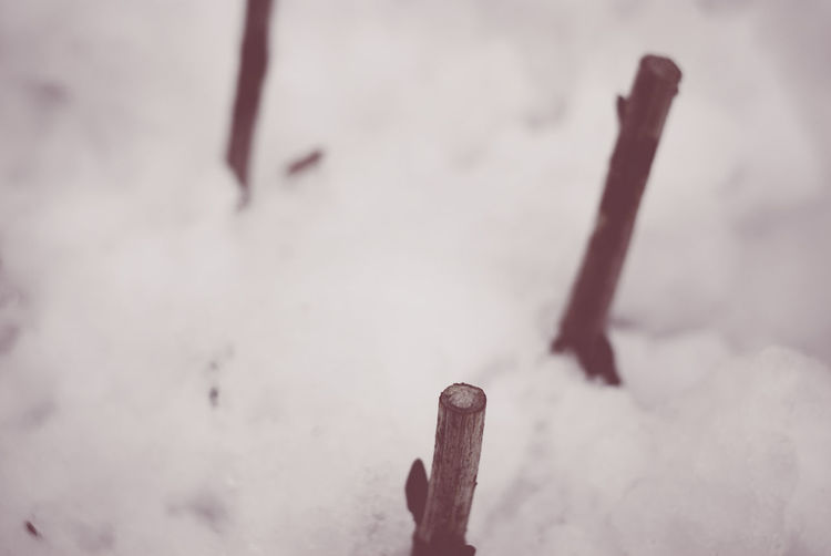 sprouts in the snow - wintertime nature Balance Brown Bud Close-up Cold Temperature Danger Detail Dirty Focus On Foreground Metal No People Plank RISK Rusty Selective Focus Single Object Snow Sprout Surface Level Textured  Twigs Wintertime Wood Wood - Material Wooden