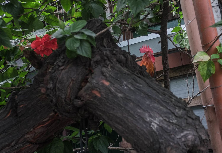 The Week On Eyem Close-up Day Flower Growth Leaf Nature No People Outdoors Plant Red Tree Tree Trunk