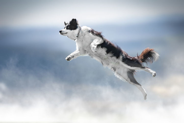 Dog jumping outdoors