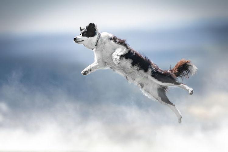 Dog jumping outdoors