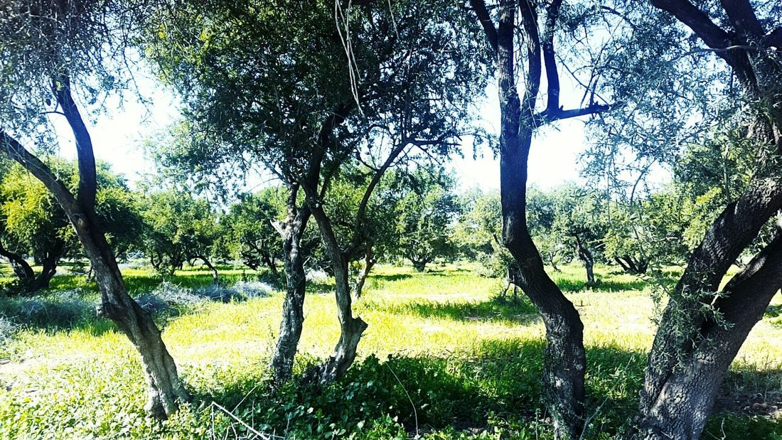 اغادير Morocco Morocco 🇲🇦 Morocco 青の街シャウエン مغرب Tree Nature No People Beauty In Nature Sky Day Grass Green Color Growth