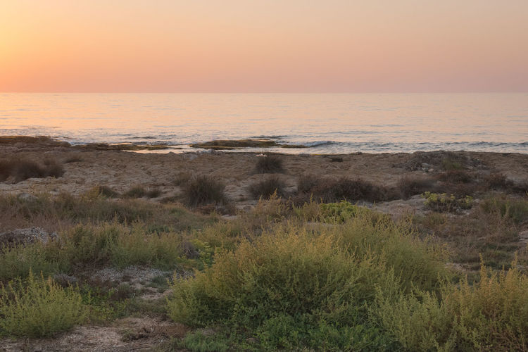Arid Climate Beach Beauty In Nature Golden Hour Grass Growth Horizon Over Water Landscape Marram Grass Nature No People Outdoors Plant Sand Dune Scenics Sea Sky Sunset Tranquil Scene Tranquility Travel Destinations Water The Great Outdoors - 2017 EyeEm Awards Copy Space