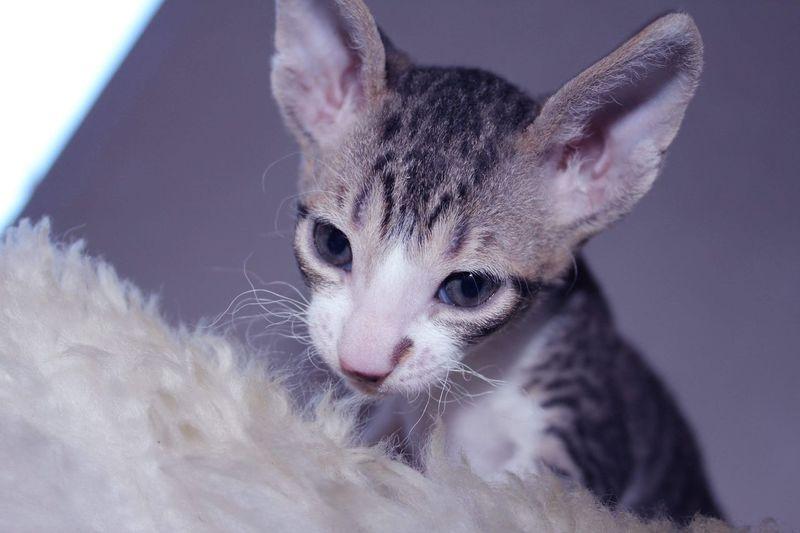 Close-up of kitten looking away