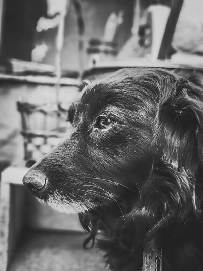 EyeEm Selects Nature Selected For Premium Bnw_collection Blackandwhite Bnw_captures Bnw_life Bnw Pets Dog Close-up Growing Flower Head Dachshund Pit Bull Terrier Beauty In Nature Stem Calm Shore Petal Pollen Pet Collar North Carolina - Us State Foggy Office Building Building Residential Structure Blooming Settlement Urban Scene