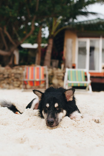 Animal Animal Themes Architecture Beach Building Building Exterior Built Structure Canine Day Dog Domestic Domestic Animals Focus On Foreground Looking At Camera Mammal Nature No People One Animal Outdoors Pets Portrait Summer Vertebrate