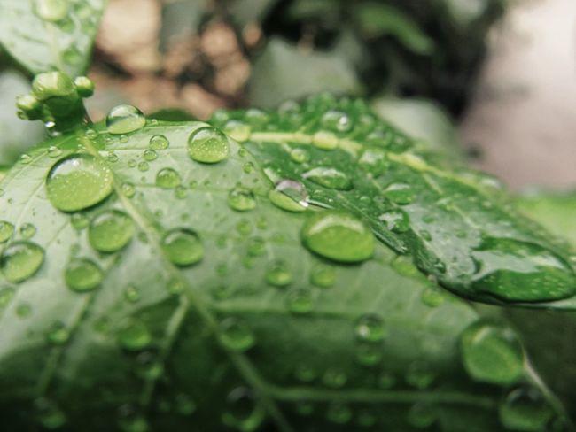 First Eyeem Photo Raindrops Freshness Leav Rain On Leaf
