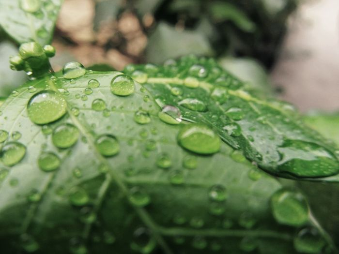 First Eyeem Photo Raindrops Freshness Leav Rain On Leaf