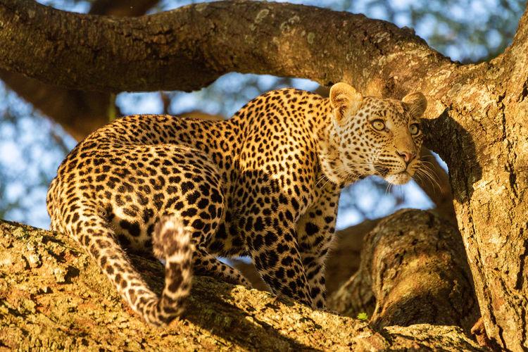 Cat lying on a tree