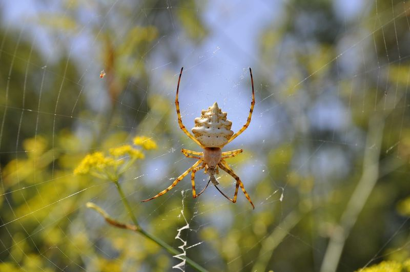 Close-up of spider on web against trees