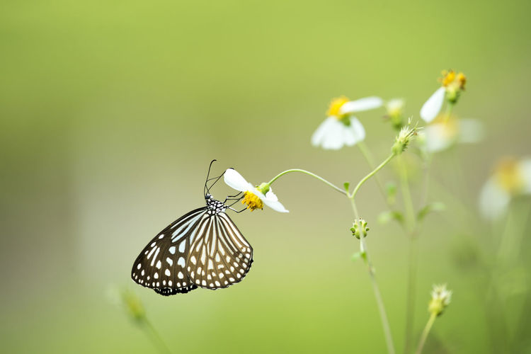 Close-Up Of Butterfly Perching On Flower