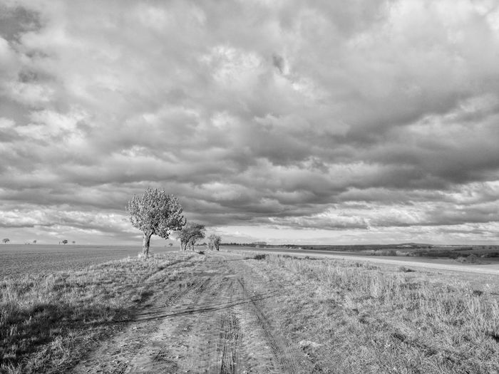 Landscape Nature Way Path Himmel Und Wolken Clouds Wolkenhimmel Wolke Weg Wolken Feld Himmel Landschaft Fileds Day Single Tree No People Pfad Bäume Baum Landschaften Landscapes Tree Nature Outdoors Traveling Home For The Holidays