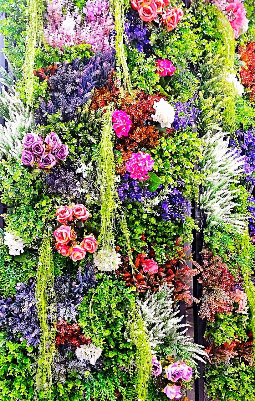 flower, plant, flowering plant, growth, beauty in nature, multi colored, nature, vulnerability, no people, fragility, freshness, day, full frame, high angle view, outdoors, backgrounds, variation, choice, botany, close-up, flower head, purple, flower arrangement, gardening, bouquet