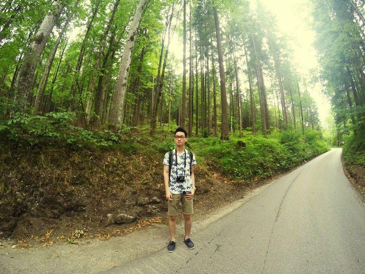The road not taken Newschwanstein Bavaria Travel Summer Nature Forest