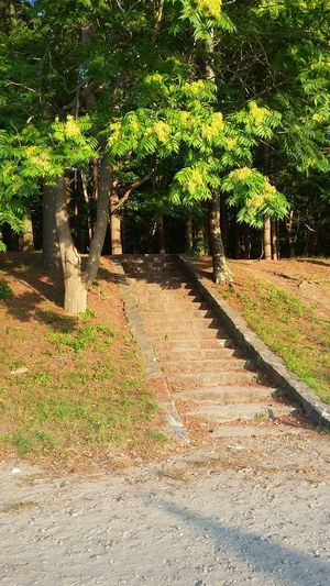 Tree Outdoors Sunlight Nature Beauty In Nature Plant Stairway Stairs To Nowhere Tranquility Trees Tranquil Scene