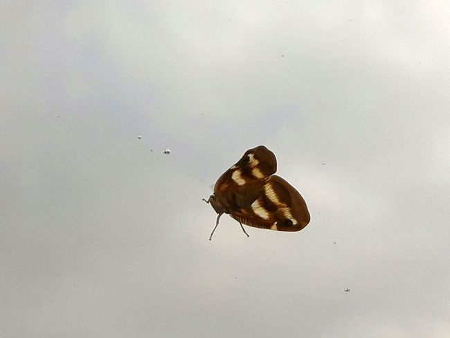 Insect Animals In The Wild One Animal Animal Wildlife Animal Themes Butterfly - Insect Day No People Nature Full Length Perching Outdoors Close-up Sky Play