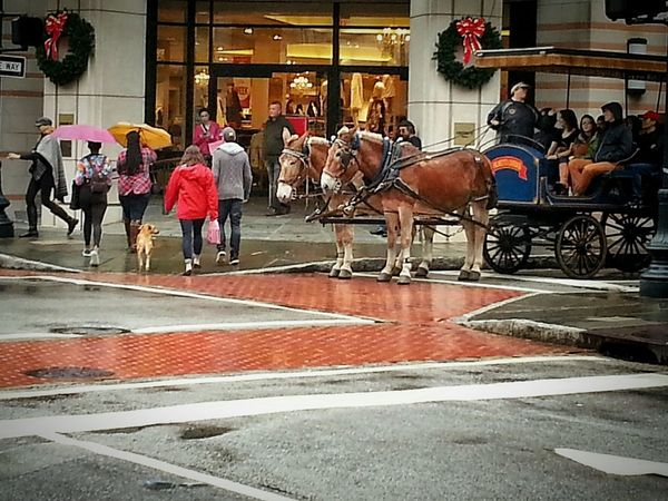 ..watching carriage ride go by in Charleston SC Coastal Carolina Roadtrip Holidays ☀ Cityscapes Streetphotography City View  Urbanphotography Historic