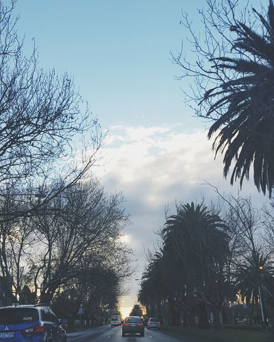 Winter Wintertime Cloud - Sky Sky Outdoors Tree Nature Gloomy Gloomyday  Melbourne Melbourne City Car City Australia EyeEm Gallery EyeEm Best Shots
