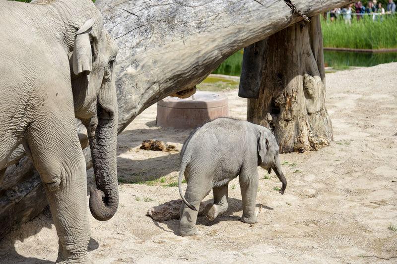 Elephant on stone wall