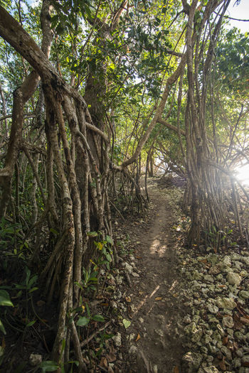 Caribbean Day Mangrove Natural Nature No People Outdoors Park Roots Sun Behind Trees Sun Light Through Trees Sunrise Tree Tropical Plants